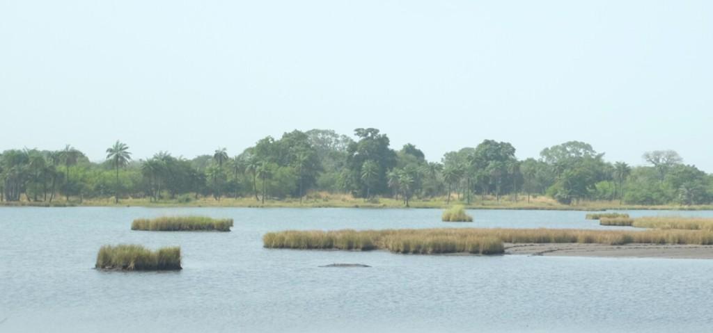 le Casamance, par l'un de ses zigzags, m'offre quelques vues et de son impressionnante largeur