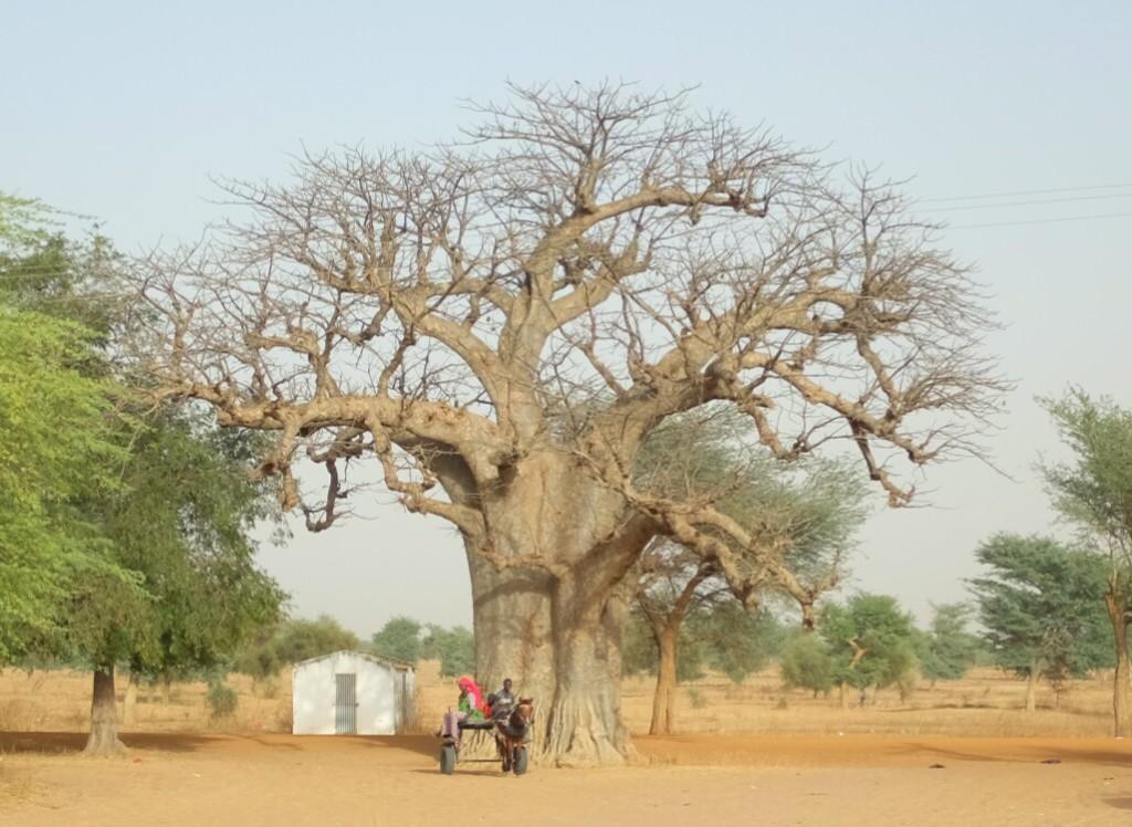 Aux portes du Sahel