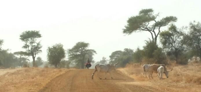en laissant Dakar derrière moi je m'attaque au Sahel.