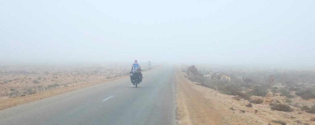 Les chameaux font face à l'océan, puis disparaissent sous le brouillard