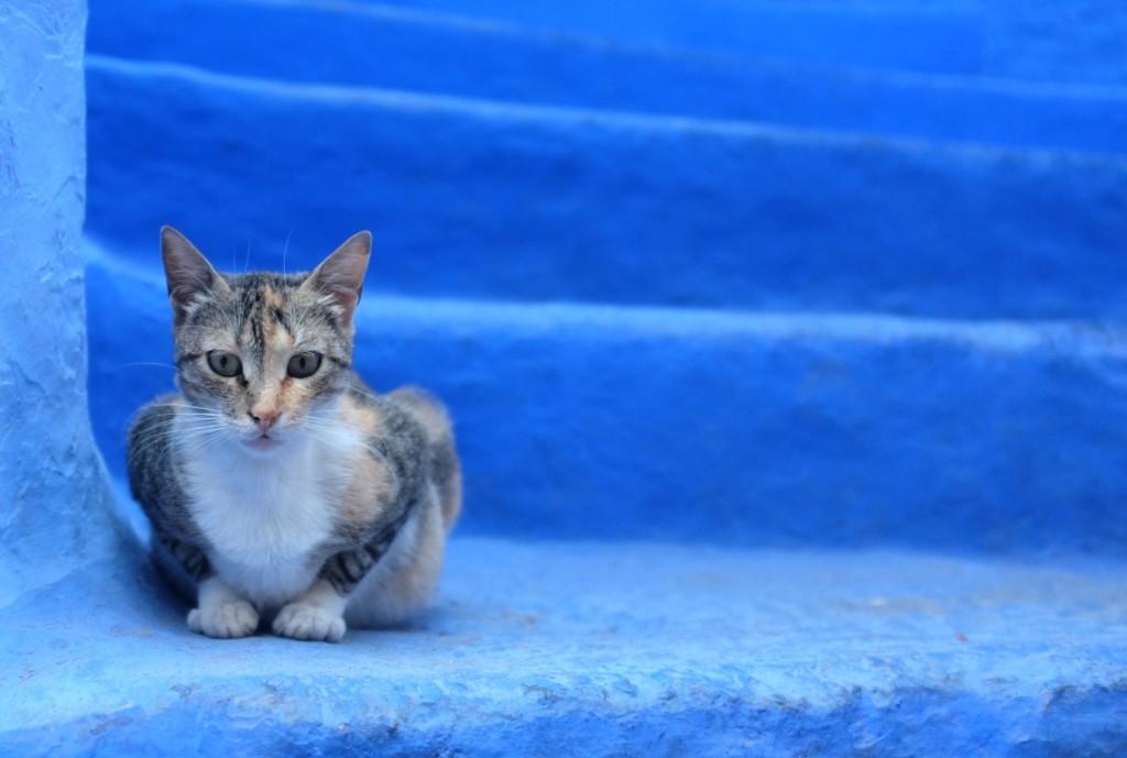 seuls quelques chats traînent dans les ruelles, régnant en maîtres